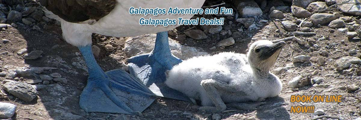 Galapagos last minute deals