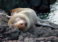 5 days 4 nights Galapagos land tours